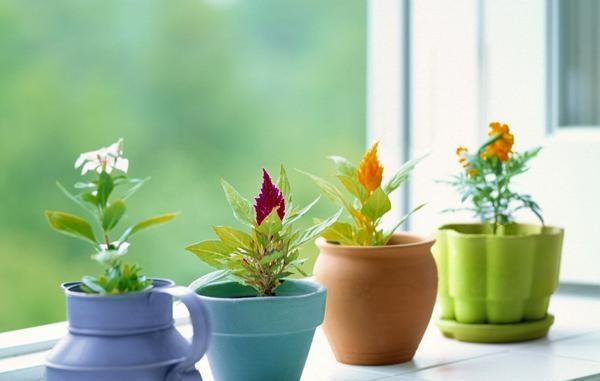 室内摆放植物的风水讲究